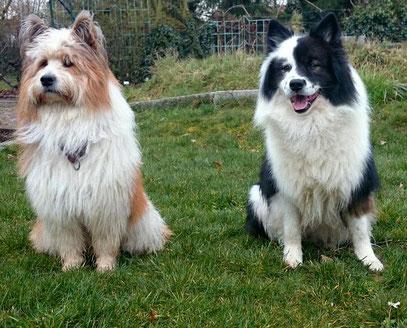 Familienhund Schulhund Therapiehund Assistenzhund