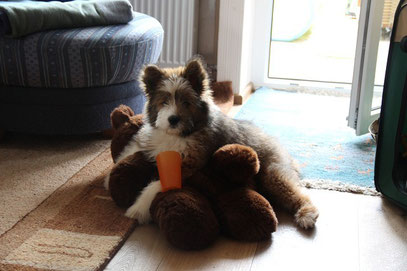 Groß Elo Rau Familienhund Kinderhund mittelgroß
