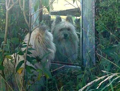 Elo wuscheliger Familienhund klein mittel groß