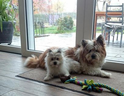 Elo Familienhund Servicehund pflegeleicht