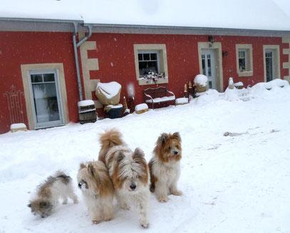 Einfache Hunderasse Ersthund Familie