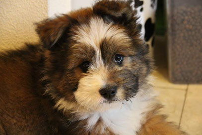Familienhund kindergeeignet Elo Rau