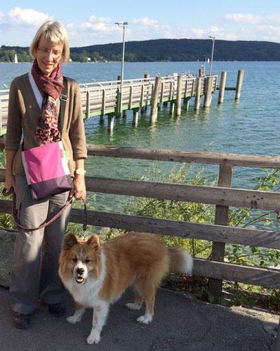 Ersthund Hunderasse für Anfänger Elo Glatt Familienhund Seniorenhund