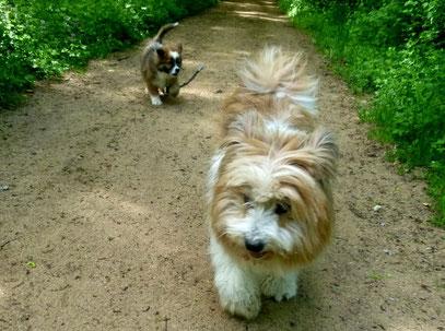 Elo mittelgroße Hunderasse rau und glatt