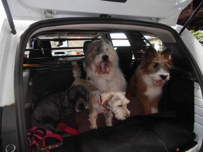 Erziehung Welpe Junghund erwachsener Hund