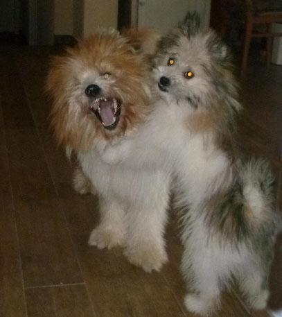 Familienhund Klein-Elo Rau