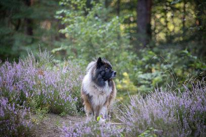 Familienhund Bayern
