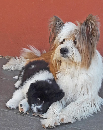 Friedliche Hunde