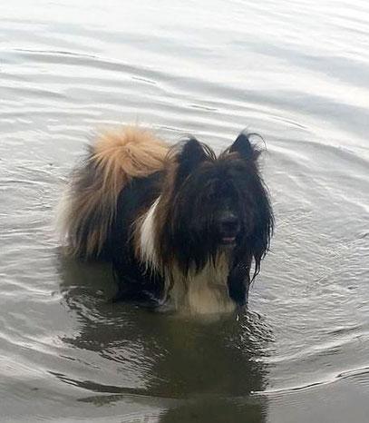 Familienhund Elo Klein Rau