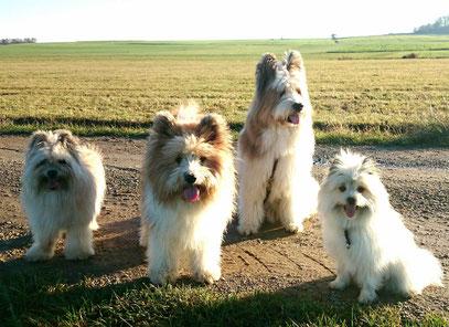 kleine Hunderasse mittelgroße Hunderassen