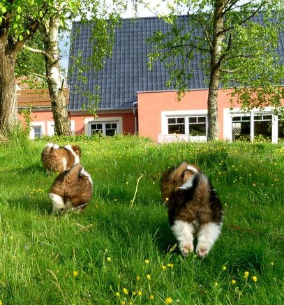 Welpe Familienhund Elo groß klein