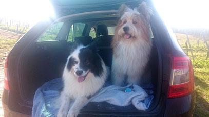 freundliche Hunderasse