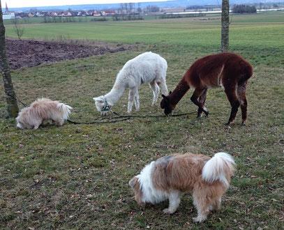 Tiere Therapie für Kinder