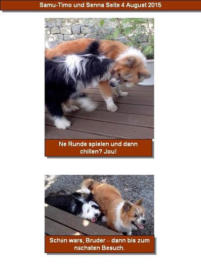 Erziehung Welpe Hund Familienhund Begleithund Regeln Hundeerziehung Ratgeber Collie Bobtail