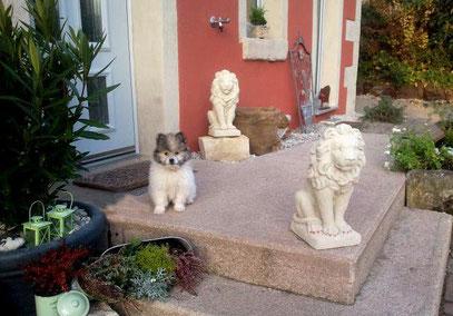 Familienhund kinderlieb Elo