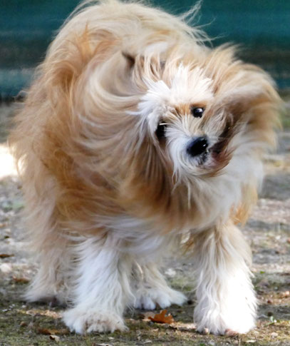 Foto: Michaela Hilburger. 3-Wetter-Taft - und die Frisur hält.