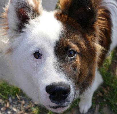 Hundetraining Nürnberg