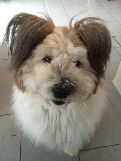Hund familienfreundlich, kinderlieb