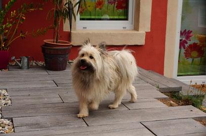 Klein Elo Rau Familienhund wuschelig