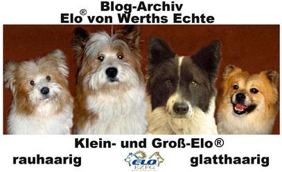 Ältere Beiträge Elo-Blog von Werths Echte