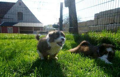Ratgeber Erziehung Elo Welpe Familienhund