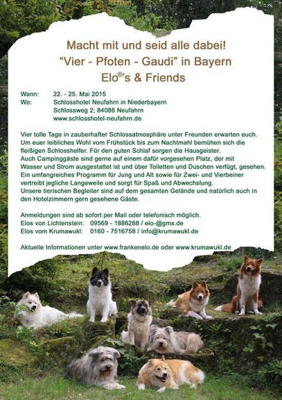 Familienhund Elo Hunderasse, Anfänger, Senior, Kind, Erziehung, klein, mittelgroß, groß,
