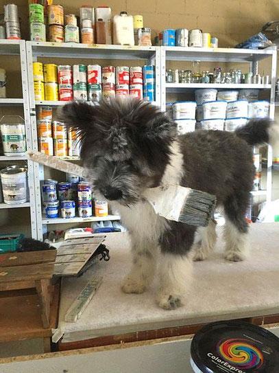 Familienhund Therapiehund Assistenzhund