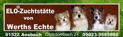 Therapiehund Schulhund Diabeteshund Assistenzhund