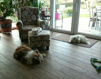 Katze und Hund Familienhund Elo