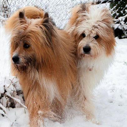 kinderlieber Familienhund