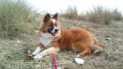Elo Glatt Erziehung Hund Therapie Assistenz Ersthund Zweithund