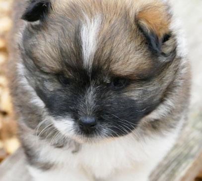 Elo, Familienhund, klein