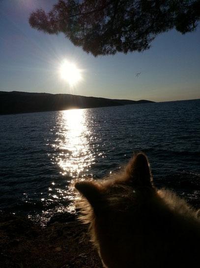 Urlaub mit Hund Rasse Elo Rau wuschelig