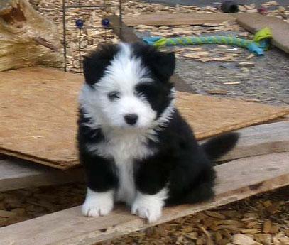 Kindergeeigneter Hund einfache Erziehung Elo Familienhund rau