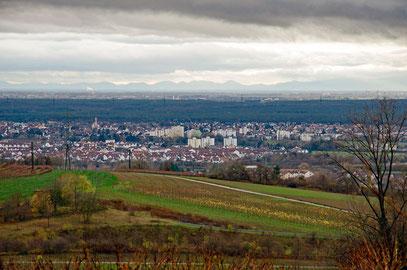 Blick vom Dachsbuckel (Weingut Bauer) aus auf die Rheinebene und den Pfälzerwald