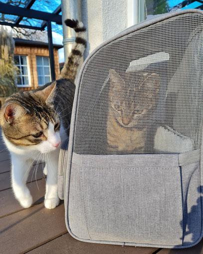 Kasi guckt neugierig, was ihre kleine Freundin im Rucksack macht.