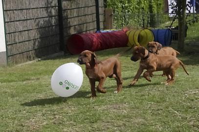 Nela bringt ihren Ballon in Sicherheit