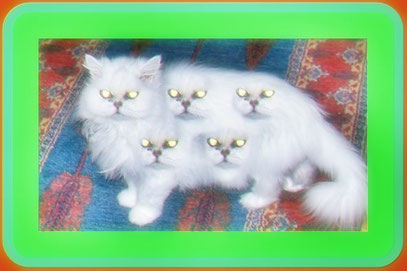 Cat-alin's Cats