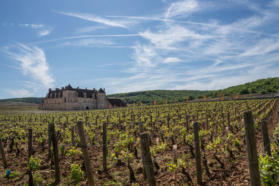 Burgund Bourgogne Clos de Vuegeot