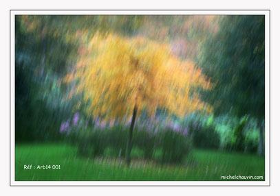 """""""Impression d'automne 1"""" Réf : Arb14 001"""