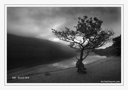 """""""L'arbre sur la plage"""" Loch Lomond. Réf : Eco13 004"""