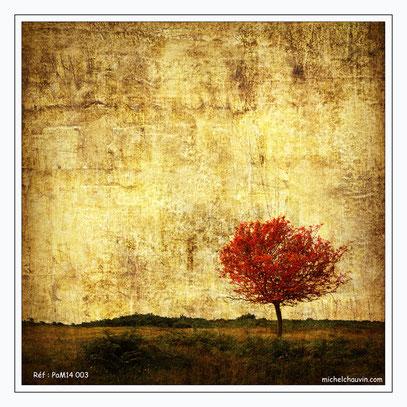 """""""Feuillage d'automne 1"""" Réf : PaM14 003"""