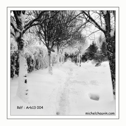 """""""Allée sous la neige"""" Réf : Arb13 004"""