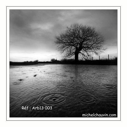 """""""Arbres et pluie 1"""" Réf : Arb13 003"""