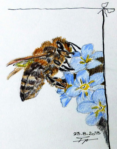 Unsere Bienen dürfen nicht sterben!