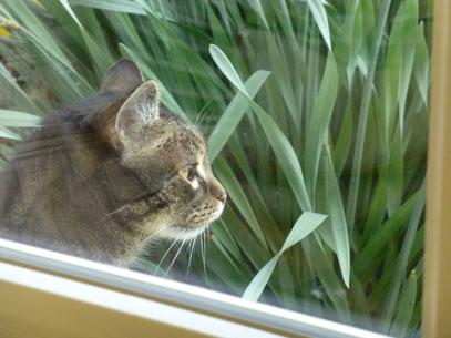 Blick durchs Fenster - Felix