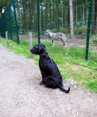 Fee bei den Wölfen in Dörverden