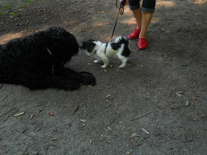 """Lilli und ein """"Snack"""" (Max)"""