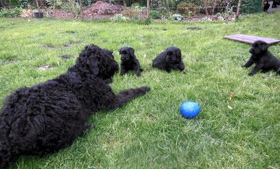 Tante Araba erzählt, was Hunde  alles wissen müssen