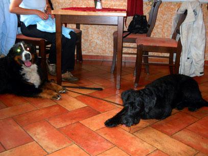Fee und Perro im Restaurant